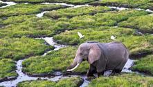 Zimbábue libera caça de elefantes, apesar da espécie estar ameaçada