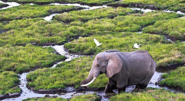 Existem cerca de 84 mil elefantes no Zimbábue, mas os parques teriam capacidade para 50 mil