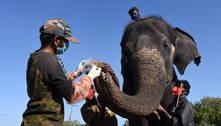 Reserva indiana faz testes de covid em 28 elefantes
