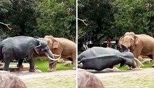Elefante furioso derruba estátua de elefante ao confundi-la com rival