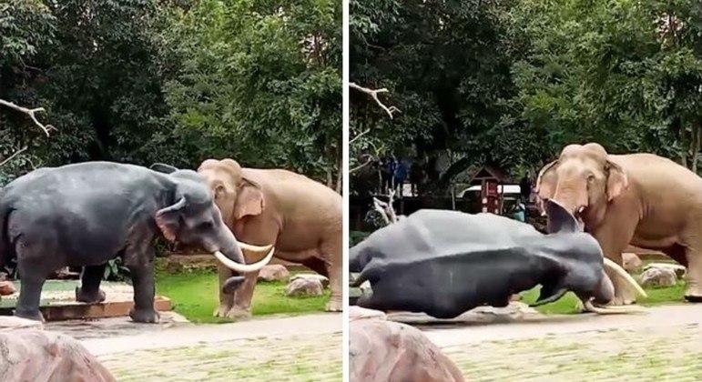 Elefante derrubou a estátua com toda a raiva que um paquiderme pode ter