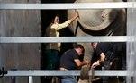 O elefante foi transportado para um santuário selvagem no Camboja, onde terá uma vida mais tranquila