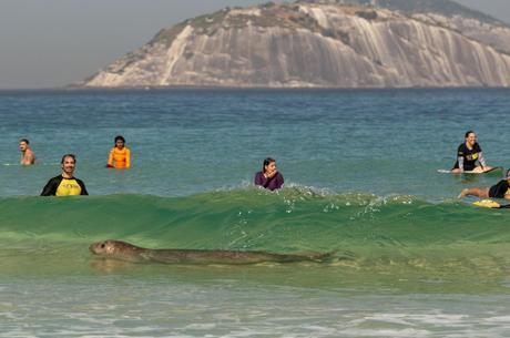 Surfistas e banhistas flagraram o momento