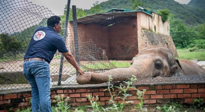 Elefante vai conseguir uma transferência de local onde melhorará sua qualidade de vida