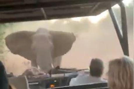 Elefante irritado corre atrás de turistas na África do Sul