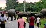 Mesmo sob vaias, buzinadas, urros e insultos, os animais atravessaram a estrada sem muita agitação