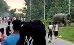 Estima-se que cerca de 300 pessoas morram anualmente no país, vítimas de encontros com elefantes. O aumento agressivo das áreas urbanas, que avançam no habitat dos paquidermes, é apontado como a principal causaNÃO VÁ EMBORA: Polícia foi alertada sobre palhaços sinistros, mas não os investigou