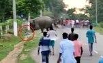 O elefante pisou nele e o pressionou com a tromba, antes de voltar ao grupo, já fora de vista.Pascal chegou a ser levado aoHospital Civil Golaghat, mas infelizmente acabou morrendo. Policiais que investigam o acidente tentam descobrir se o comportamento dos animais foi uma resposta às provocações
