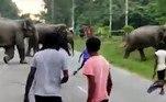 As imagens chocantes foram registradas no nordeste da Índia, no estado de Assam. Elefantes em busca de comida passaram por uma estrada e interromperam o fluxo de trânsito, ocupado principalmente por agricultores de uma plantação de chá