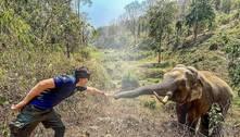 Elefante reconhece veterinário que cuidou dele 12 anos antes