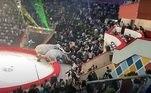 Ao mesmo tempo, organizações protetoras de animais pedem o fim da participação de animais selvagens em circos de todo o país