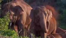 Elefante que se separou de manada na China é devolvido para casa