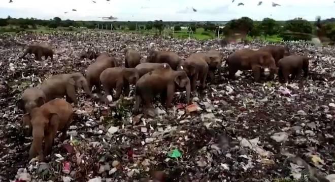 Os elefantes têm invadido um aterro sanitário em busca de comida