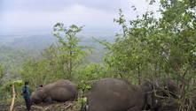 18 elefantes são encontrados mortos após queda de raio na Índia