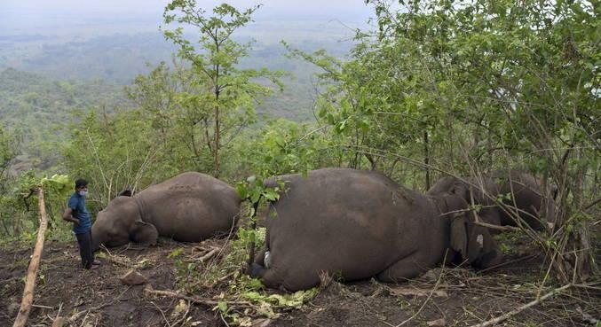 Pelo menos 18 elefantes morreram após queda de raio