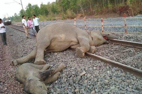 Elefantes colidiram com trem ao atravessar os trilhos