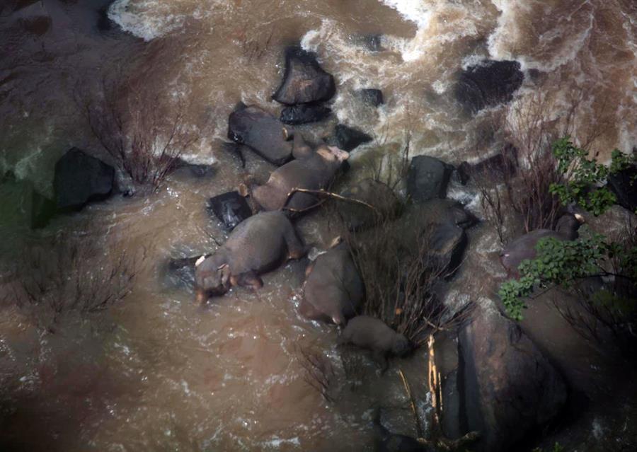 Resultado de imagem para elefante cachoeira seis morrem