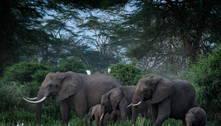 Fundação britânica enviará manada de elefantes para o Quênia