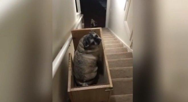 Norte-americana criou um elevador para ajudar seus cãezinhos idosos