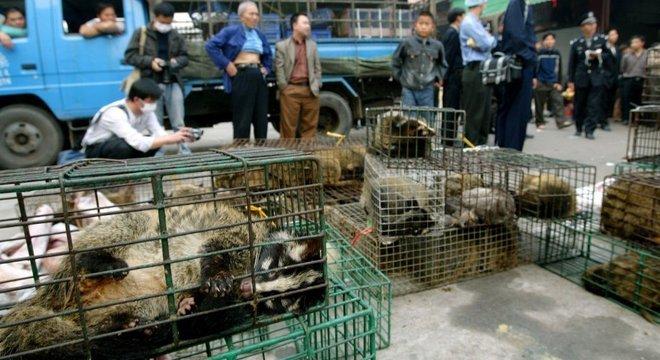 Em 2004, as autoridades confiscaram civetas no mercado de animais silvestres de Xinyuan, em Guangzhou, para impedir a propagação da Sars