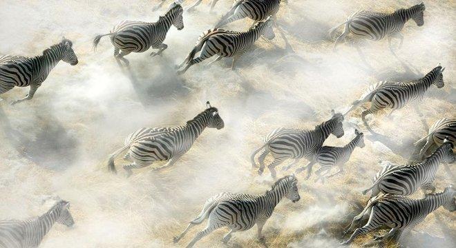Da camuflagem a uma 'marca de identidade própria', já foram muitas as hipóteses para tentar explicar por que as zebras são listradas
