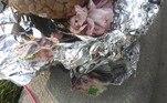 Além do suposto órgão, o embrulho também continha flores eo que parece ser uma cédula com caracteres mandarim impressosBombou no HORA 7!'Nova Barbie Humana' arrecada dinheiro de fãs para retirar costelas