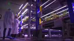 Cultivada nos Emirados Árabes, fazenda vertical pode ser solução para a agricultura ()