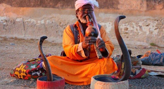 Cobras são temidas, mas reverenciadas em muitas culturas