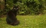 Uma dica: é um gato preto!LEIA MAIS:Ovo esverdeado confunde criadora de galinhas: 'Não mudei a comida'