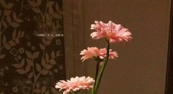 Enfeite a sala de jantar com um lindo e delicado vaso com flores de gérbera