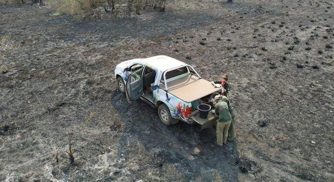 Equipe do Instituto Arara Azul monitora destruição após queimadas