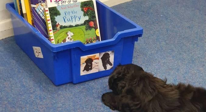 Pet foi escolhido pela escola para auxiliar no combate ao estresse das crianças