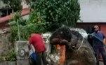 Funcionários locais especulam que o rato estava guardado em algum local atingido pelas enchentesVale o clique:Urso pode ser sacrificado após dar patada em perna de corredora