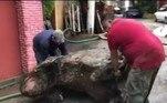 A ideia era desobstruir o sistema de drenagem da parte sul da cidade