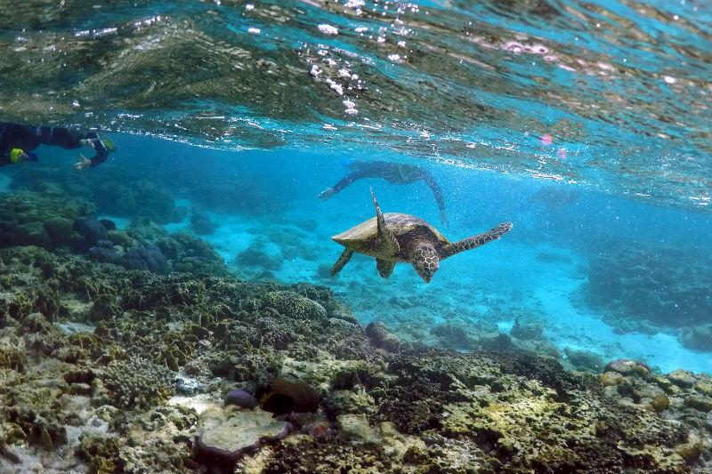 Número recorde de 1 milhão de espécies em risco de extinção