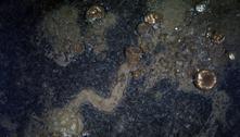 Cientistas em choque descobrem que esponjas do mar andam muito