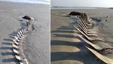 Esqueleto gigante aparece na areia de praia no litoral de São Paulo