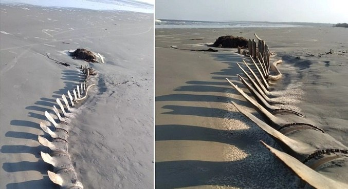 Ossada gigante foi encontrada no litoral sul de São Paulo