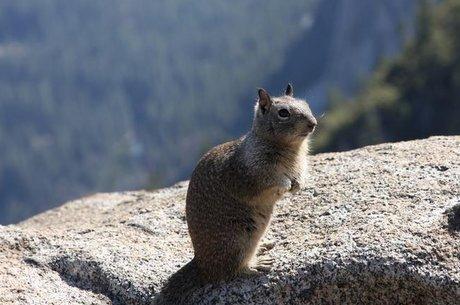 Ataque de esquilos são mais comuns do que se imagina