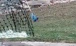 No entanto, enquanto alguns brincavam com a possibilidade da existência de esquilos azuis, outros suspeitavam de crueldade contra o animal