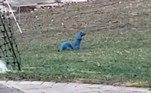 'É claro que existem esquilos azuis, desde que existam humanos babacas por perto', comentou um internautaVale o clique:Dieta macabra: essa cobra devora os órgãos de sapos ainda vivos