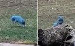 O registro de um esquilo com pelugem azul não apenas chocou os internautas, como também os deixou revoltados