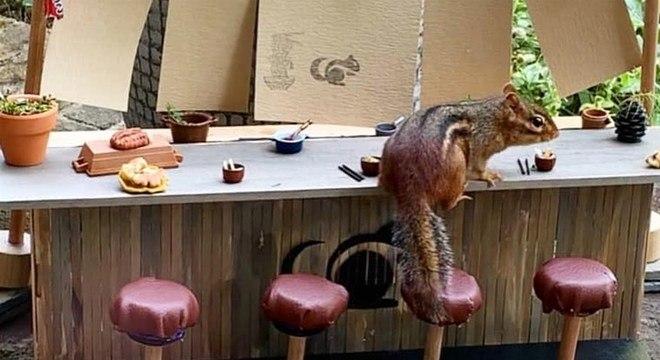 O esquilo vai todos os dias na casa da Angela para se alimentar