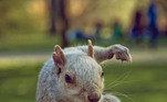 Lembre-se dessa pose respeitável se ver um esquilo!Nos Estados Unidos, um esquilo pintado de azul causou revolta e iniciou uma investigação. Veja a seguir essa história e as imagens do caso insano!