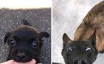 Um antes e depois para derreter coraçõesLeia mais:De Madonna a Lady Gaga: cães posam como sósias de famosos