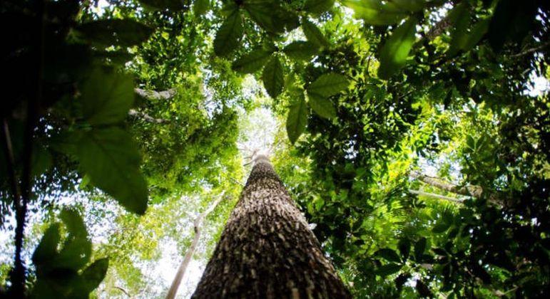 Estado do Amazonas - curiosidades sobre o maior estado brasileiro