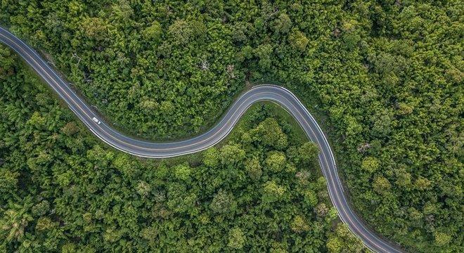 O desmatamento contribui significativamente para as emissões globais de carbono, de acordo com o IPCC