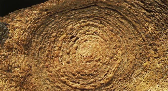 Estruturas minerais como estes estromatólitos são fundamentais na produção de oxigênio