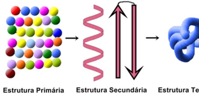 Estrutura das proteínas, o que é? Definição, tipos e características