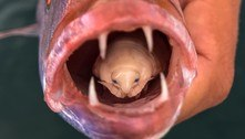 Estudante de biologia captura peixe com parasita no lugar da língua